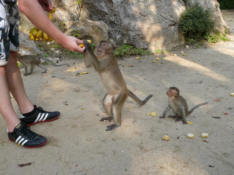 monkeyfarm_01.jpg