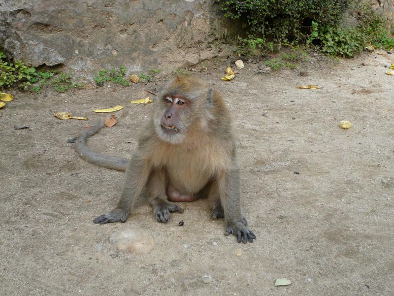 monkeyfarm_03.jpg